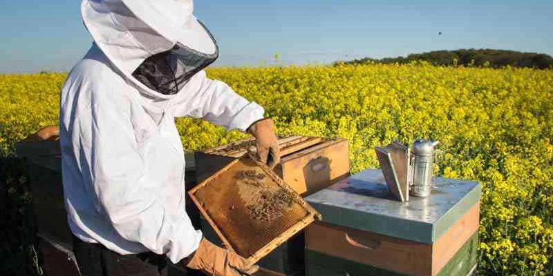 Abren un curso online gratuito sobre apicultura