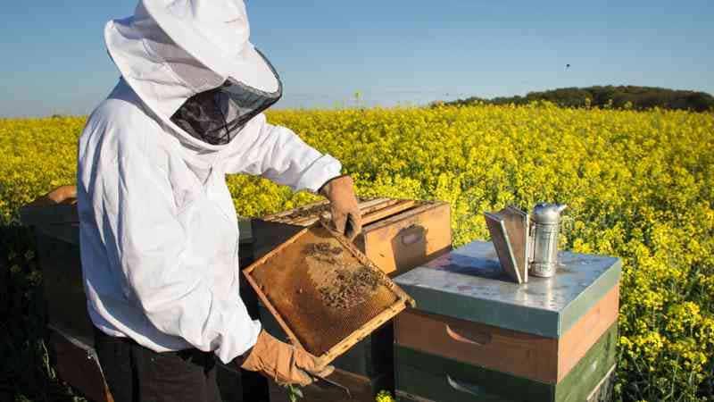 abren-un-curso-online-gratuito-sobre-apicultura.jpg