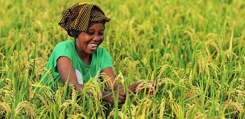 agriculture-massive-open-online-courses.jpg